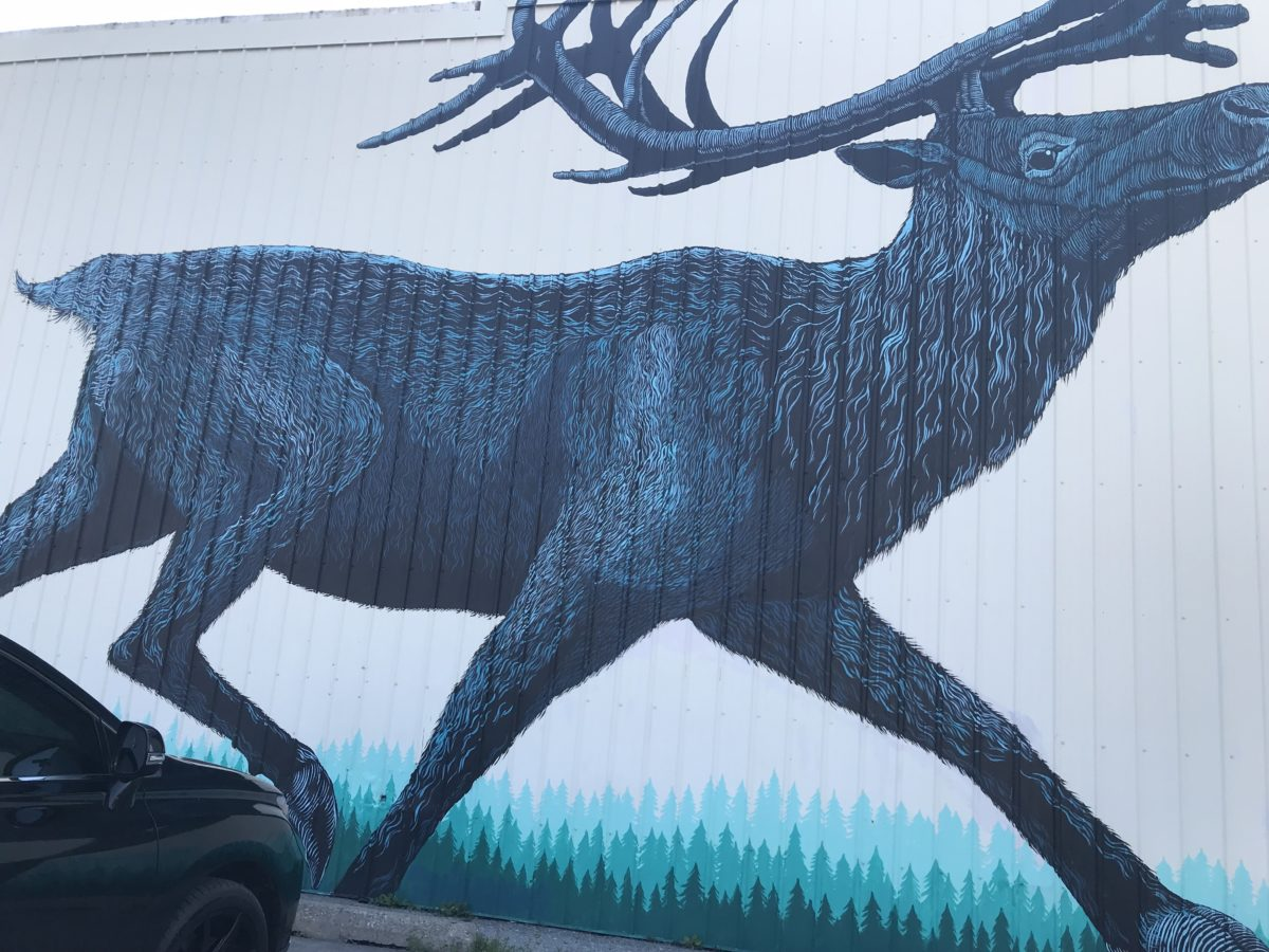 Idaho Moose
